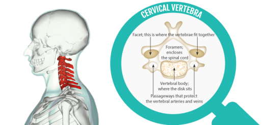Cervical-vertebrae