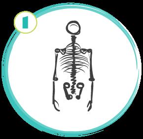SkeletonUpperBack