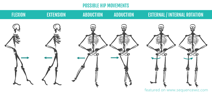 Possible hip movements