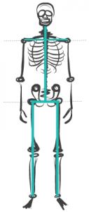 SkeletalStructure