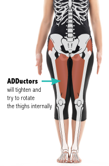 Hip adductors in Mountain pose