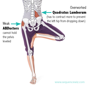 Hip abductors in Tree pose