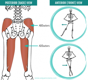 Hip abductors and adductors