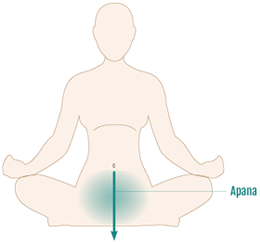 five currents of prana and how they organize your physiology 5 vayus