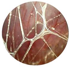 fascia what it is and why it matters anatomy