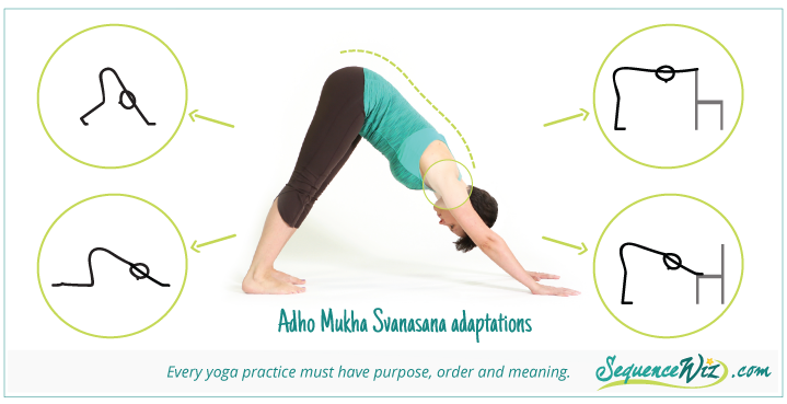 Downward Dog Adaptations