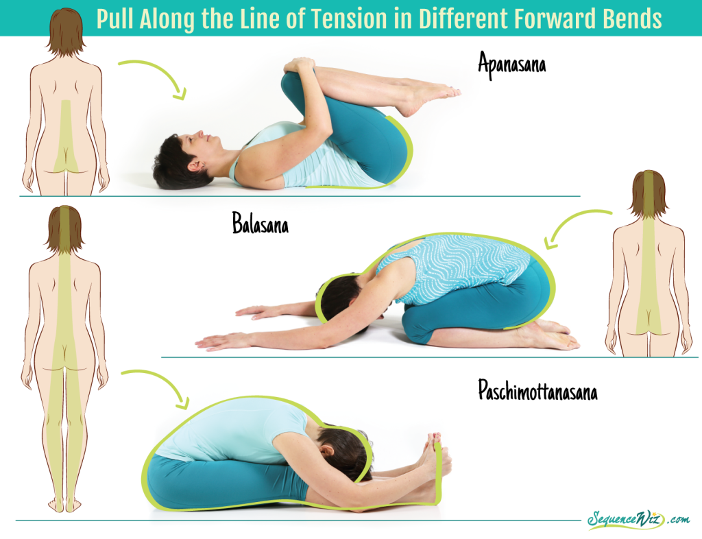 Pull along the line of tension in forward bends