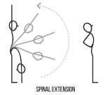 SpinalExtension