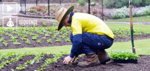 Yoga fr Gardening Title