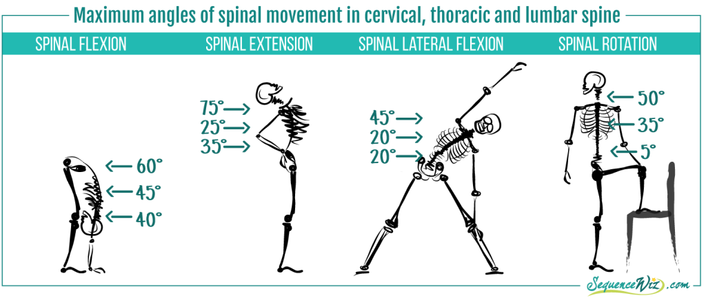 Mobility of the spine