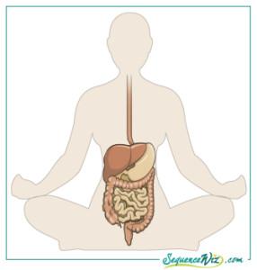 Digestive-system_Western