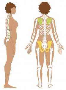 Stages of bservation_bones