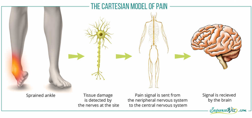 Cartesian model of pain