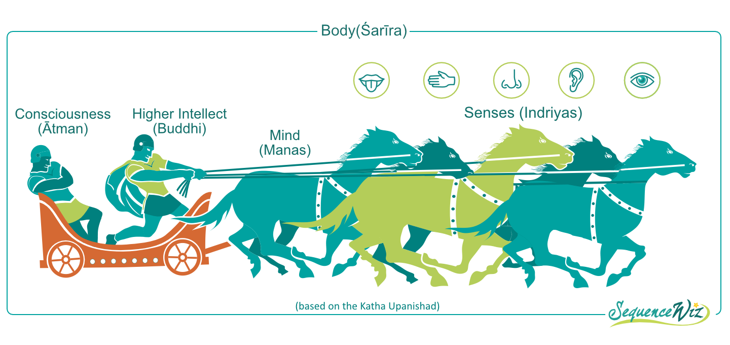 Who Is Driving Your Chariot The Traditional View Of The Relationship Between The Senses Mind And Intellect Sequence Wiz
