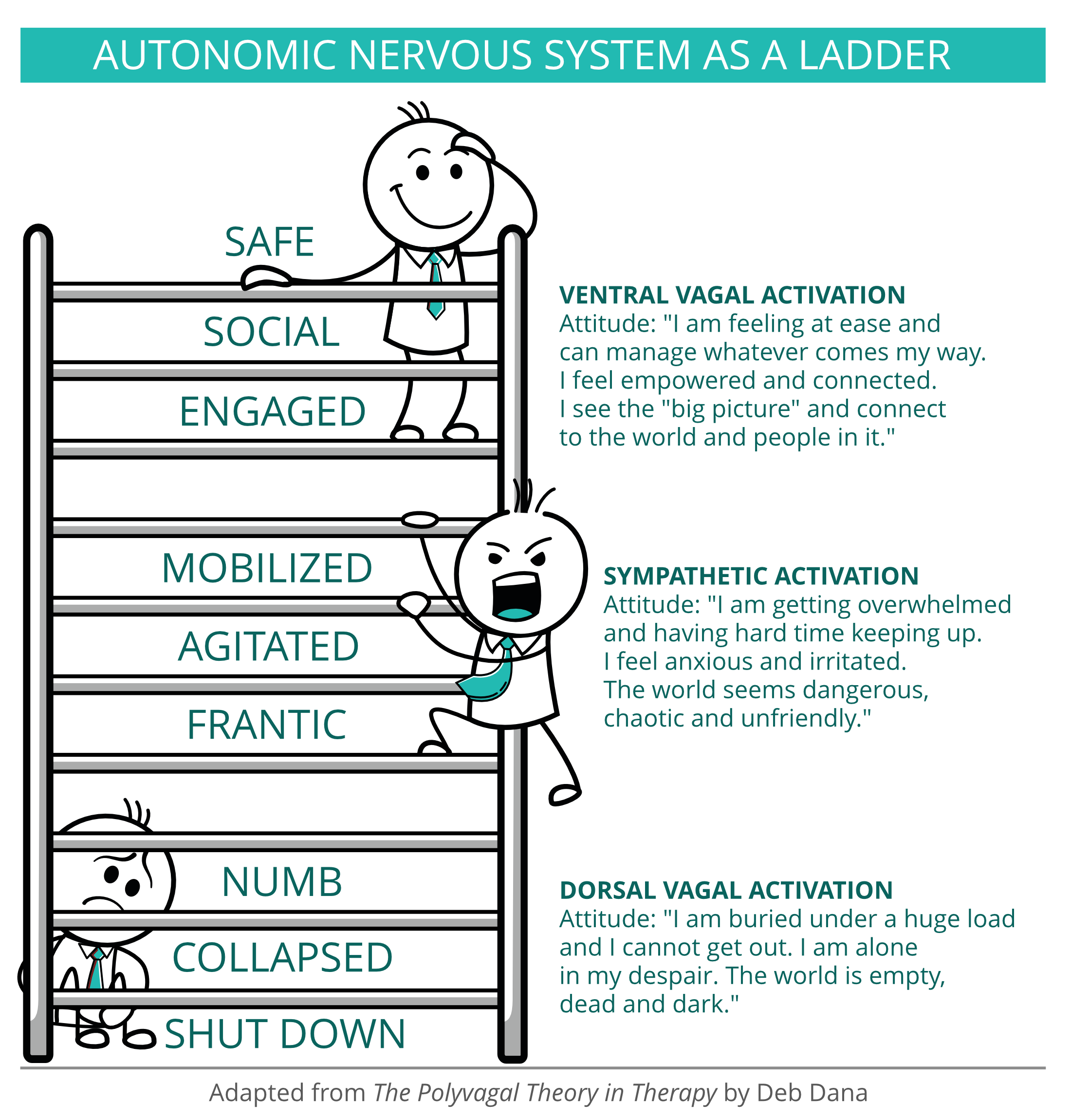 Autonomic nervous system as a ladder