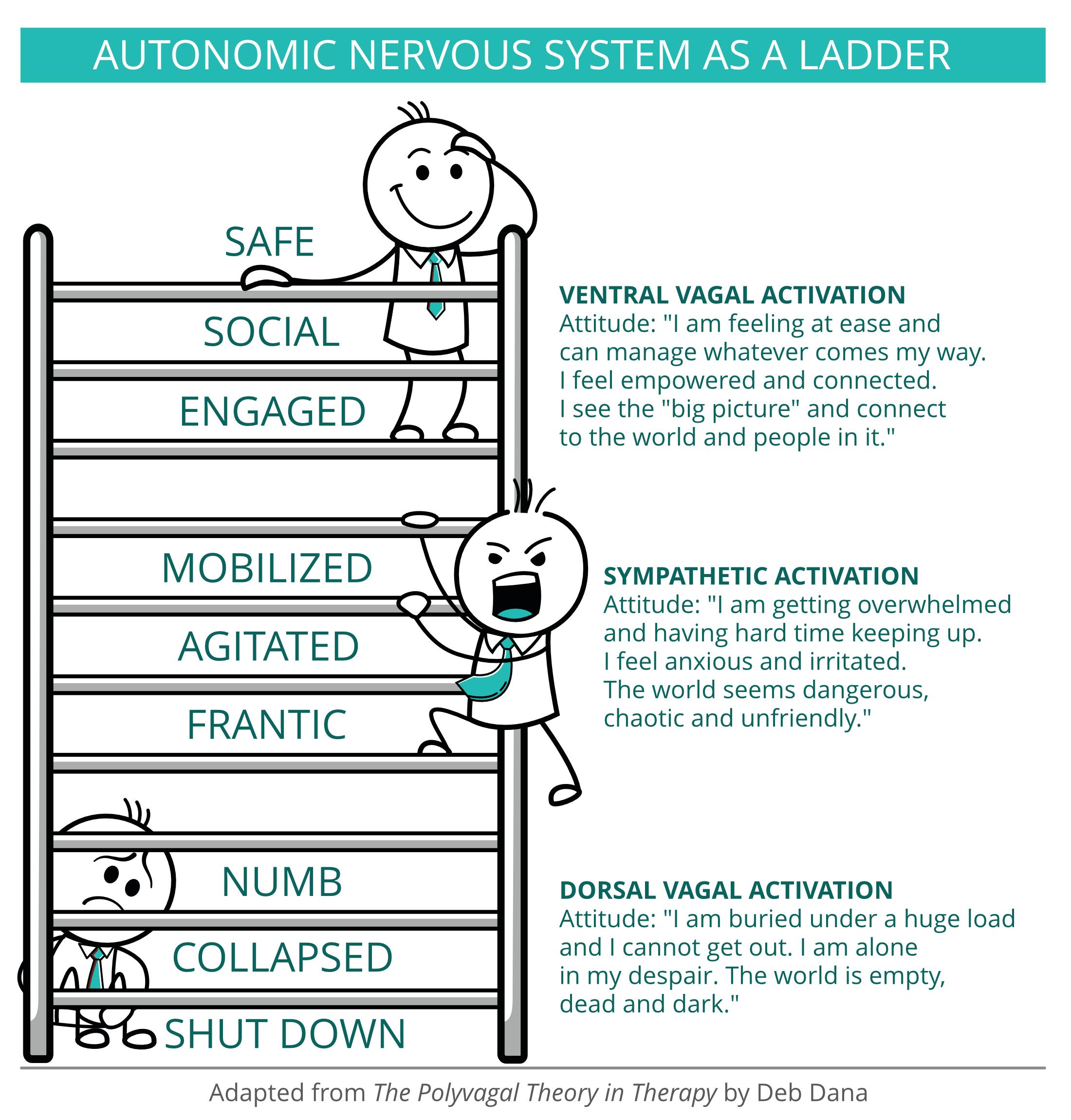 Autonomic nervous system as a ladder
